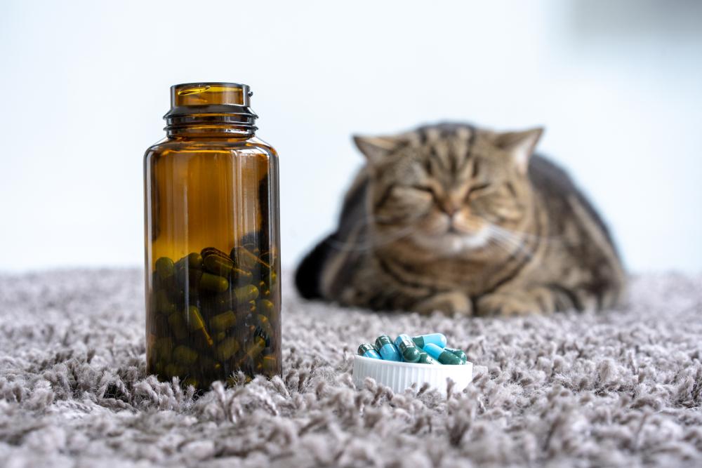 Stres u zwierzaka – jak sobie z nim radzić i jakie suplementy będą pomocne?