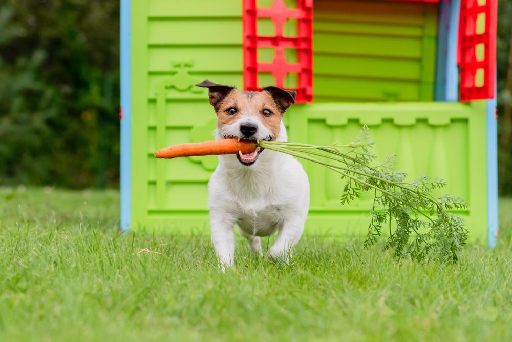 Suplementy na wzmocnienie odporności dla psów